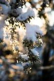 Snowy meraviglioso Immagini Stock