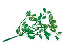 Snowy mistletoe Stock Photo