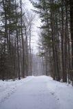 Snowy, misty forest trail Stock Photo