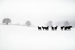Snowy-Morgen Lizenzfreie Stockfotos