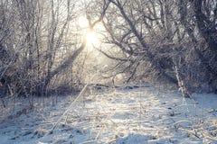 Snowy-Morgen-Licht Lizenzfreie Stockbilder