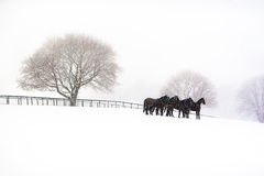 Snowy morning. Horses on a farm on a snowy morning Royalty Free Stock Image