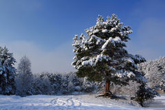 A snowy morning. In the mountains Royalty Free Stock Image