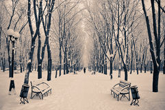 A snowy morning Royalty Free Stock Photos