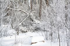 A snowy morning in a forest stock image