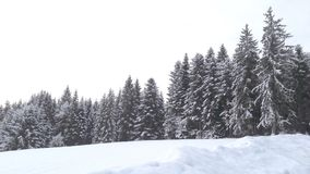 A snowy morning in the forest. Forest in the snow Stock Photography