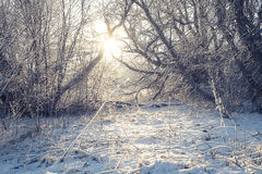 Snowy Morning Light Royalty Free Stock Images