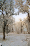 Snowy Morning Scene Royalty Free Stock Photos