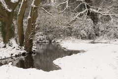 A snowy morning  on Southampton Common. A snowy morning beside a small stream on Southampton Common, Hampshire, UK Stock Photography