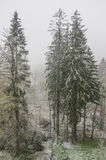 A snowy morning Royalty Free Stock Images