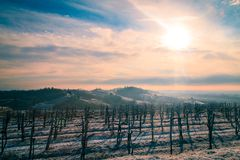 Snowy morning in the vineyard. Snow and ice in the vineyard of Friuli, Italy stock photos
