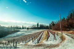 Snowy morning in the vineyard. Snow and ice in the vineyard of Friuli, Italy stock photo