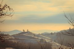 Snowy morning in the vineyard. Snow and ice in the vineyard of Friuli, Italy royalty free stock image