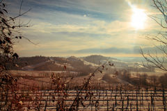Snowy morning in the vineyard. Snow and ice in the vineyard of Friuli, Italy stock photography