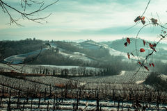 Snowy morning in the vineyard. Snow and ice in the vineyard of Friuli, Italy royalty free stock photo
