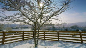 Snowy morning. Wind blows fresh snow off the tree brunches on a sunny winter morning stock footage