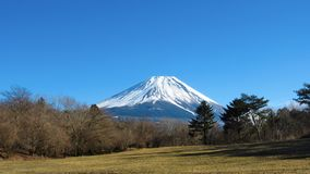 Snowy Mount Fuji. Snow covered Japanese mount fuji on a sunny, clear sky winter day with trees and a field of grass in front royalty free stock photography