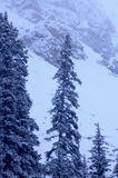 Snowy Mountain 1. Cold snowy mountain on Colorado's Front Range Royalty Free Stock Image