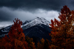 Snowy mountain and autumn forest Stock Photos