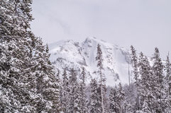 Snowy Mountain Behind the Lodgepole Pines Stock Photo