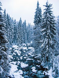 Snowy mountain creek in the woods Royalty Free Stock Photos