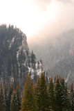 Snowy mountain forest Stock Image
