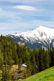 A snowy mountain and a forest Stock Images