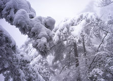 Snowy mountain huangshan. Covered by snow and fog Royalty Free Stock Photos