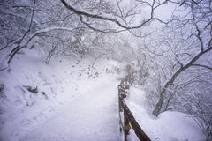 Snowy mountain huangshan. Covered by snow and fog Stock Images