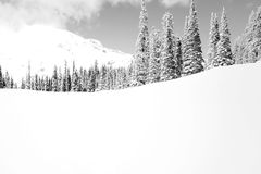 Snowy mountain landscape. Black and White snowy slope capped with tall pointy conifers pine and fir trees under a snow capped mountain Royalty Free Stock Photography