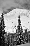Snowy mountain landscape. Black and White snowy slope capped with tall pointy conifers pine and fir trees under a snow capped mountain Stock Photography