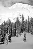 Snowy mountain landscape. Black and White snowy slope capped with tall pointy conifers pine and fir trees under a snow capped mountain Royalty Free Stock Photo