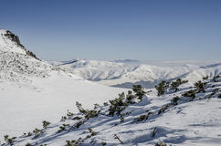 Snowy mountain landscape. A view from the Bucegi Mountains Peak. with snow covering the coniferous forest Stock Photos