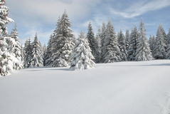 Snowy mountain meadow Royalty Free Stock Photos
