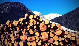 Snowy mountain with the pile of cut logs with snow Stock Image