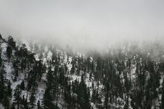 Snowy Mountain, Pine Trees, and Fog stock photography
