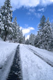 Snowy Mountain Road. Sierra mountain road lined with trees and covered snow on a clear winter day Royalty Free Stock Images