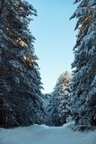 Snowy Mountain Road In Sunny Winter Forest Royalty Free Stock Photo