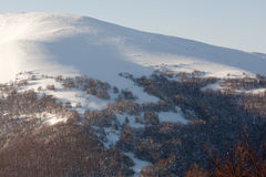 Snowy mountain slope. Snowy slope with trees. Clear sky. Carpathians, Ukraine Royalty Free Stock Photos