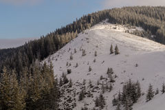 Snowy mountain spine. With hills and coniferous forest in a sunny day Stock Photography