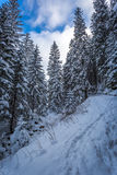 Snowy mountain trail in the woods Royalty Free Stock Photo