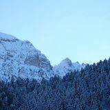 Snowy Mountainous Alpine Pine Forest royalty free stock photo