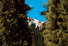 Snowy Mountains. In the distance between two pine trees royalty free stock photography