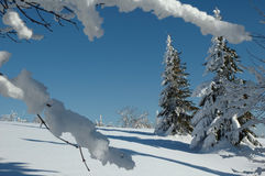 Snowy mountains. And trees on sunny winter day Royalty Free Stock Photography