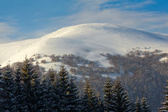 Snowy mountains. Snowy hill and blue sky, evergreens. Carpathians, Ukraine Royalty Free Stock Image