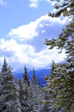 Snowy mountains. And snow covered trees in Canadian Rockies Stock Photography
