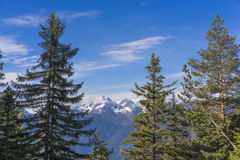 Snowy mountains behind fir-trees. Beautiful view of snowy mountains behind fir-trees Royalty Free Stock Images