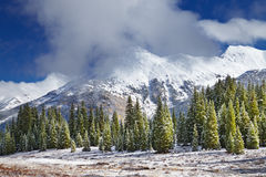 Snowy mountains and forest, Colorado Stock Image