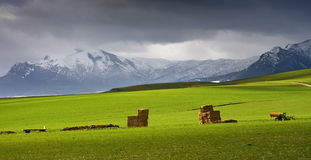 Snowy mountains and grassland Royalty Free Stock Image