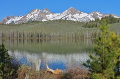 Snowy Mountains on the Lake. Snow capped mountains  above a forested  shoreline on a mountain lake Stock Images